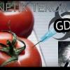 Genetik Terör – GDO'lu ürünler hakkında bilinmeyenler!