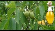 Felçli hastaların şifa kaynağı Ceviz yaprağı ve Zeytinyağı mucizesi.