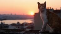 Bu Dünya'dan bir PATİ (kedi) geçti. Limon'un gerçek hikayesidir.