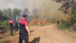 Orman yangını bu kez Bursa'da!