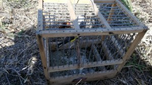 Saka kuşu avcılarına rekor ceza