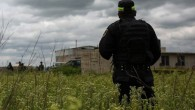 14 bodies found on farm in Mexico