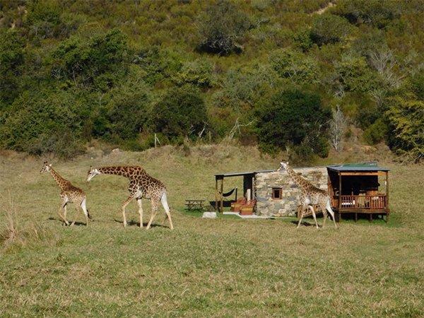"""Güney Afrika'nın Safari Çadır Evleri """"Vahşi Doğa Tutkunları"""" Fiyatı 224 dolar"""