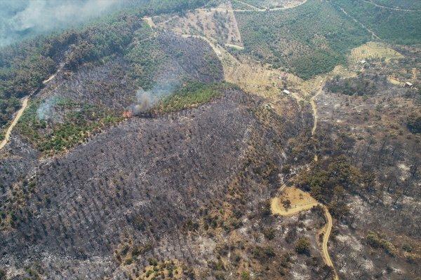 İzmir'de 500 hektar orman yandı