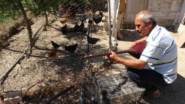 Verimin artmasını isteyen adam hayvanlarına saz çalıyor