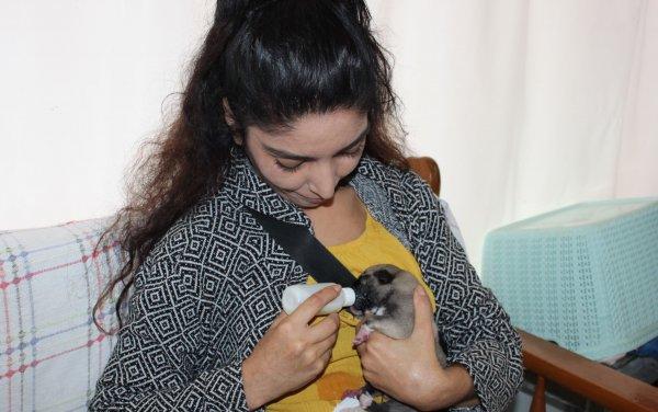 Mersin'de annesiz yavru köpek biberonla besleniyor