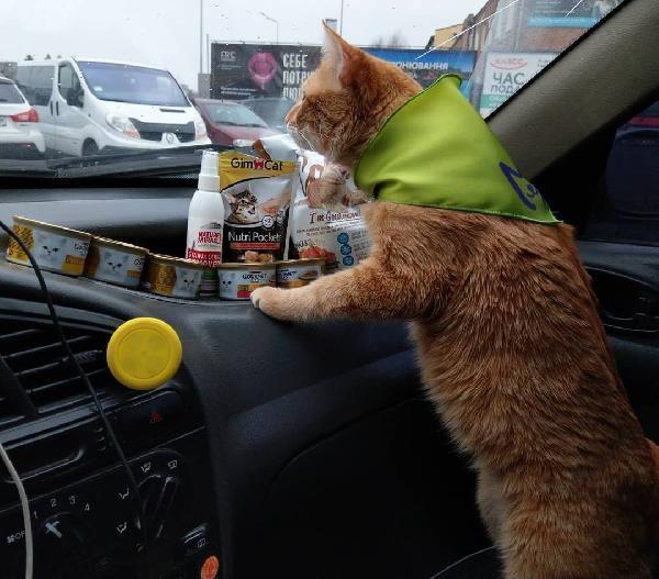 Ukrayna'nın en popüler taksisi: Kedili taksi -4